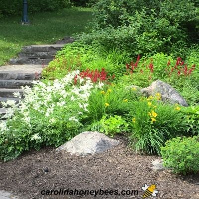 How to Make a Rain Garden for Bees