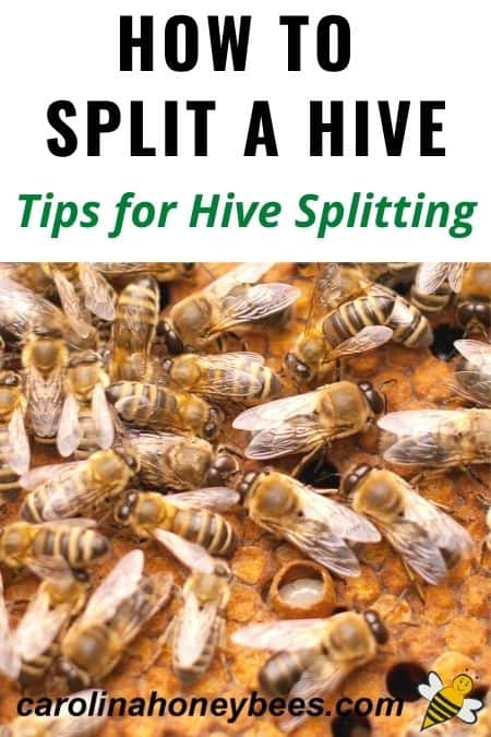 image of bees in a hive how to split a beehive