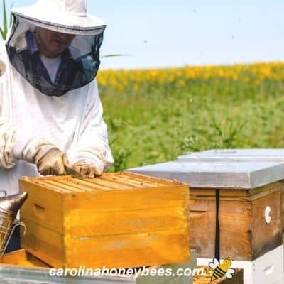 Beekeeping opening up a beehive job image.