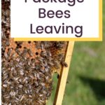 Honey bees from a hive how to prevent package bees leaving image.