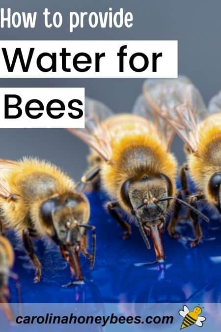 Honey bees collecting water from source image.