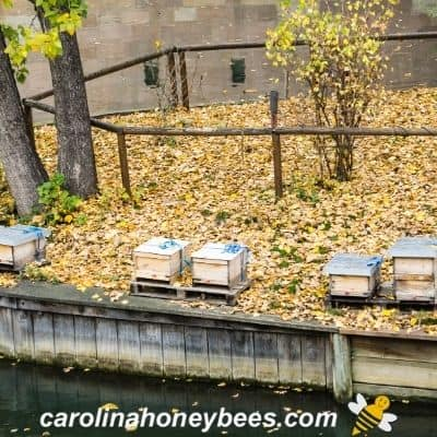 picture of beehives near a waterway