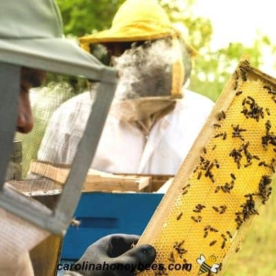 Beekeeper receives tips and advice from another beekeeper image.