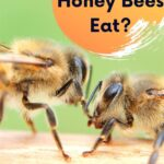 picture of 2 honey bees eating shared food