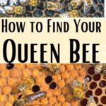 picture of queens how to find your queen bee