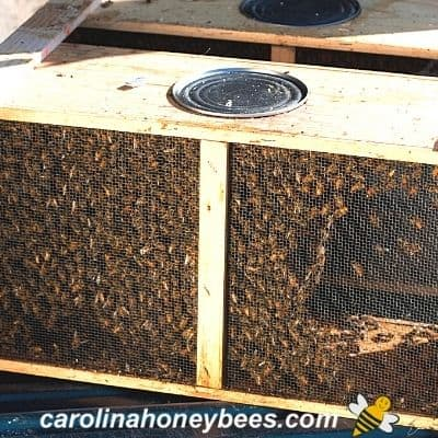 Installing a Package of Bees In Your Hive