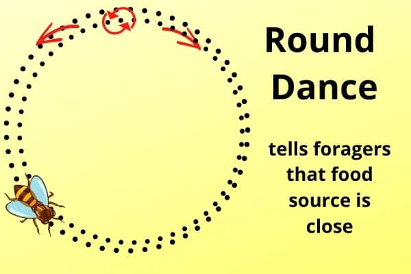 diagram of the honey bee round dance