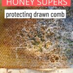 picture of honey super wax destroyed by moths