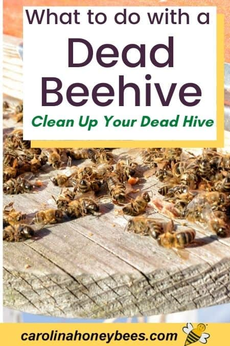 picture of dead bees in front of hive, what to do with a dead beehive