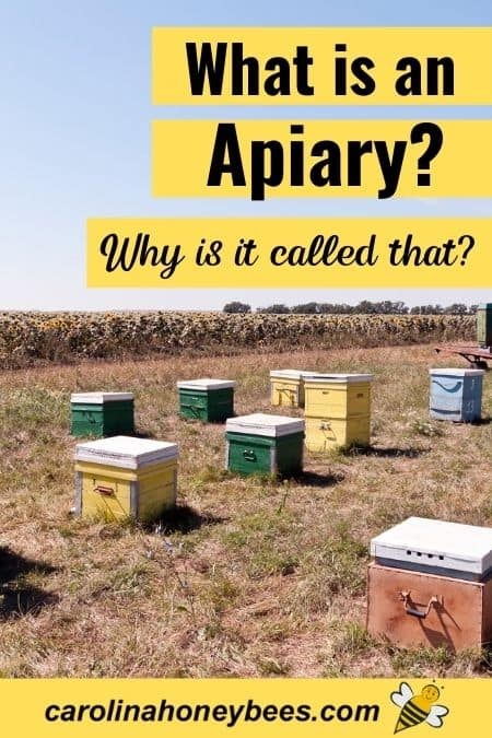 picture of a group of beehives, what is an apiary