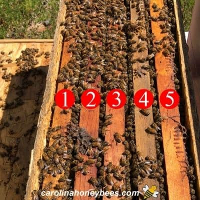 5 frame bee nuc with bees image.