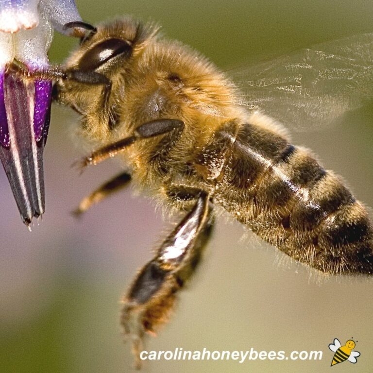 Do Bees Have Knees-Yes {Thankfully}
