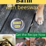 Various dog feet and tin of homemade dog paw balm image.