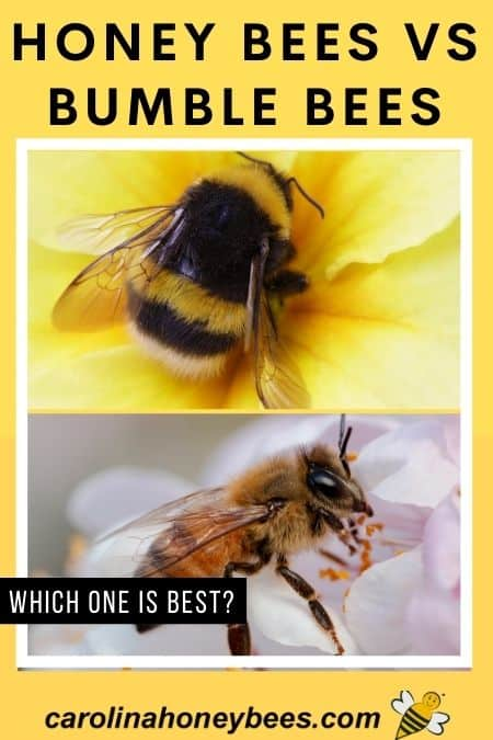 Photo of bumble bee and honey bee on flowers image.
