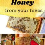 Collection of honey harvesting images.