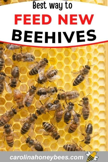 Honey bees on comb best way to feed new beehives image.