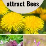 Various images of weeds that attract bees image.