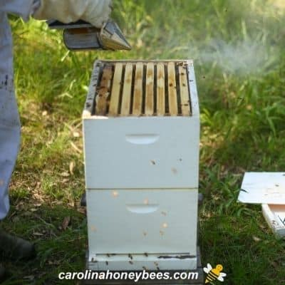 Double deep honey supers for a new hive of bees image.