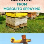 Beehives in yard and airplane spraying for mosquitos image.