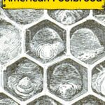 Diagram of dead brood from AFB in a comb image.