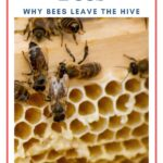 Honey bees in hive absconding bees image.