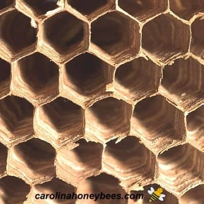 Bee Nest vs Wasp Nest-Which One is It?