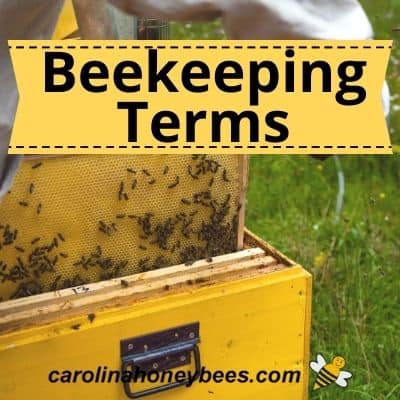 Beekeeping Terms-Every Beekeeper Should Know