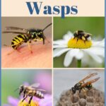 Can you tell the differences bees vs wasps image.