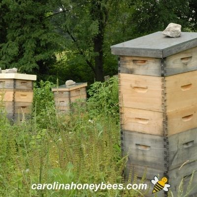 Beehives with several honey boxes stacked on top image.