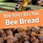 Honey bee with pollen and bee bread pellets image.