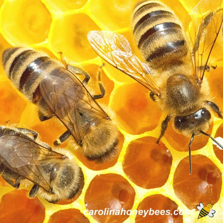 How Much Honey Does a Bee Make?