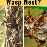 Honey bee nest and paper wasp nest image.