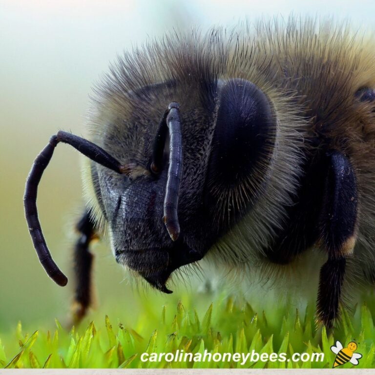 Do You Have a Fear of Bees?|Apiphobia