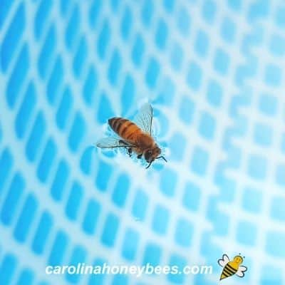 How to Keep Bees Away from a Swimming Pool