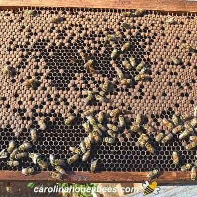 Deep frame from a nuc hive with bee brood image.