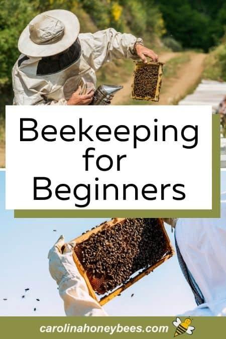 Beginner beekeepers tending bees in the hive image.