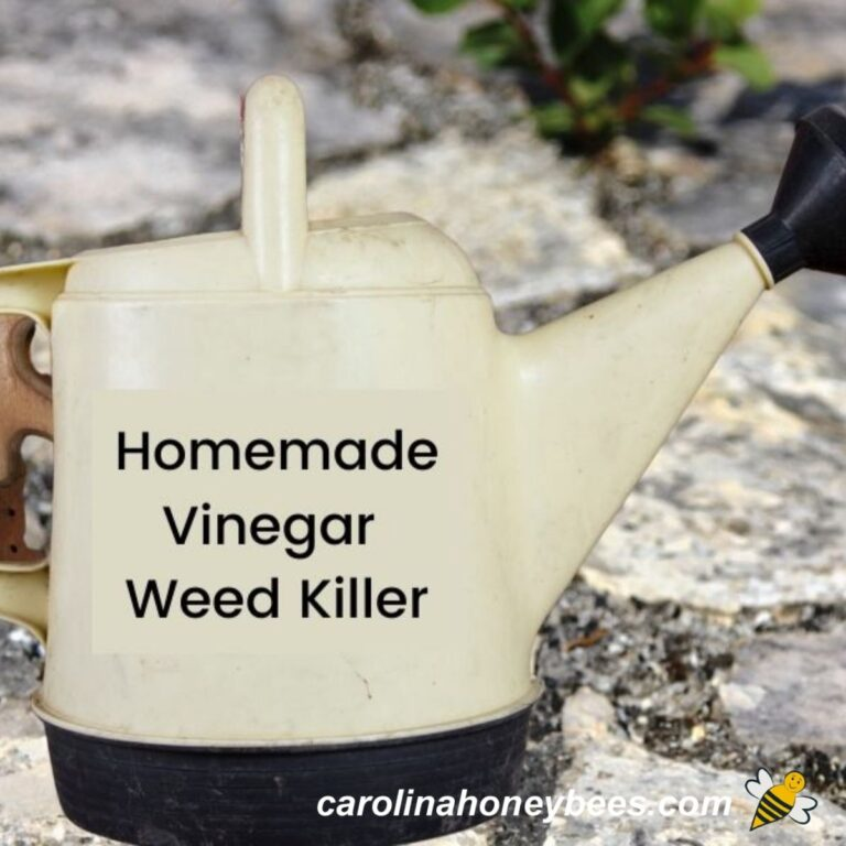 Vinegar Weed Killer-How to Make it and Use it