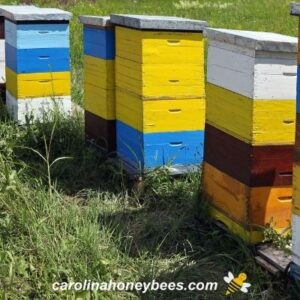 Beehives with colorful supers in a field image.