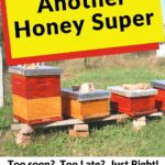 When to add another honey super beehives in the field image.
