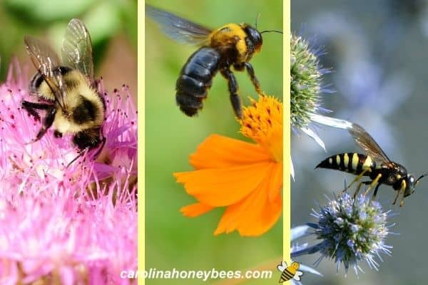 Bumble bee, carpenter bee and wasp on flower image.