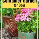 Potted flower containers for bee garden image.