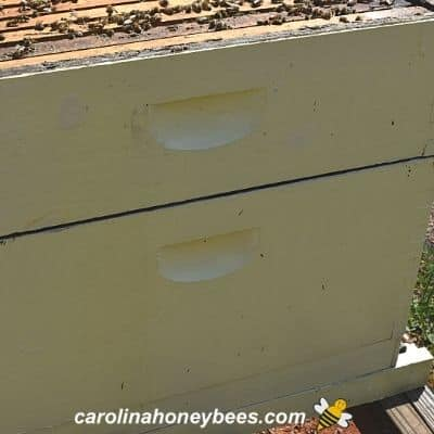 Small gap between beehive boxes with formic acid pro treatment in place image.