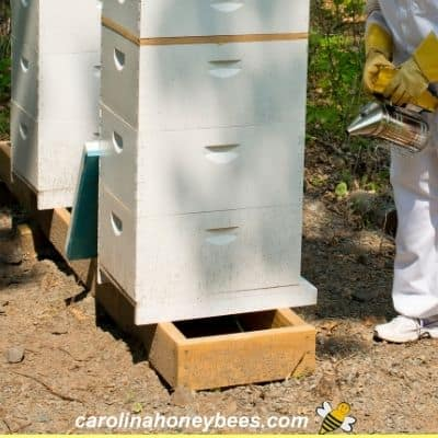 Beehives sitting on stand on soil with no vegetation image.