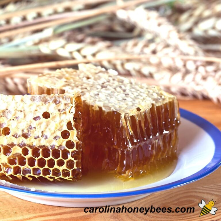 Is Honeycomb Edible- {Is it Safe to Eat Beeswax}