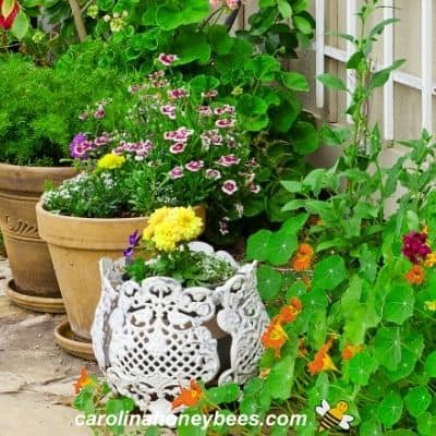 Colorful garden of flowers for bees in containers image.