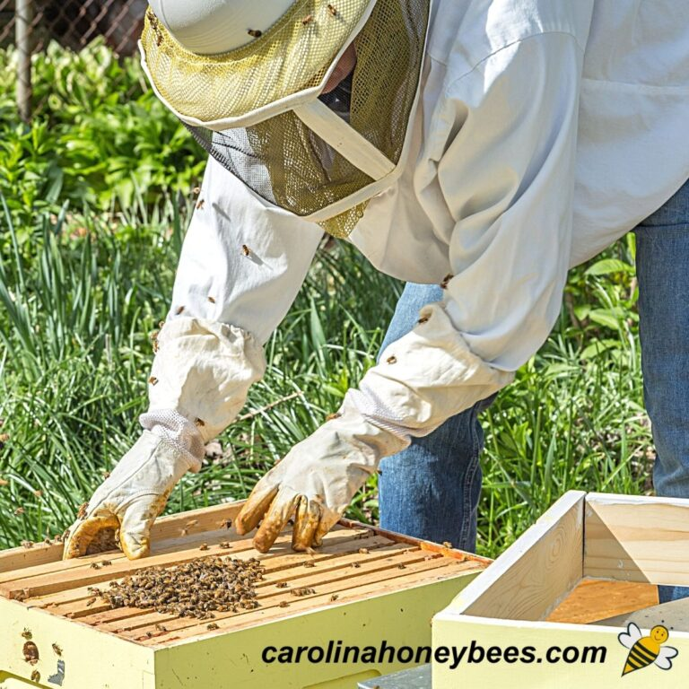 How to Start a Bee Farm-Tips for Success