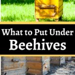 Beehive on grass and hive on sand what to put under beehives image.