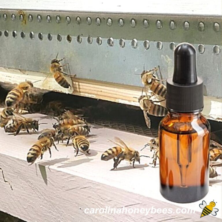 Best Ways to Use Essential Oils for Honey Bees