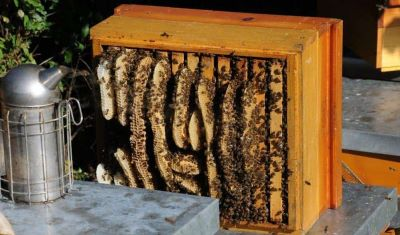 Failure to build a honey bee hive of the proper dimension resulting in poor comb building image.