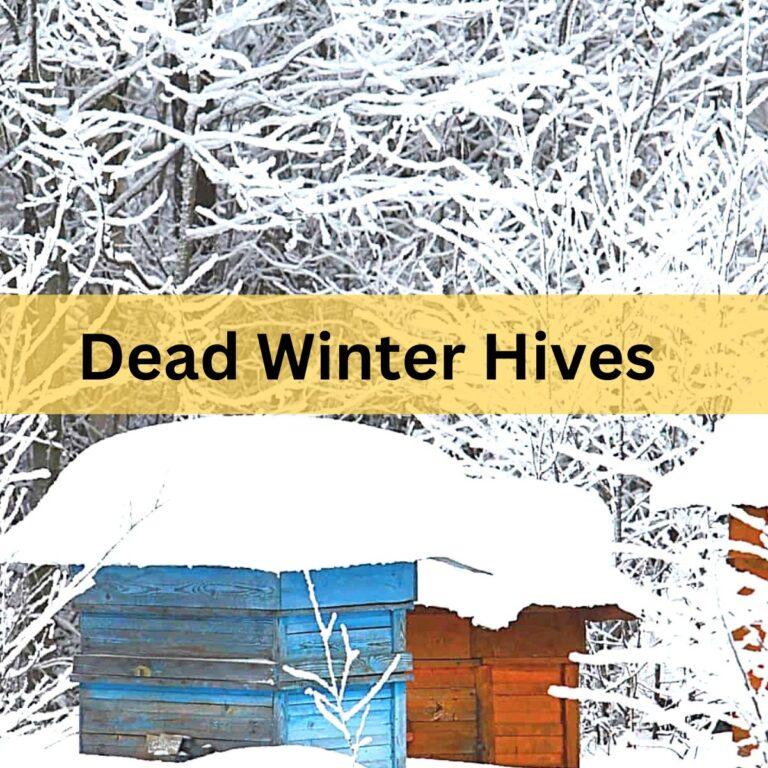 Reasons Honey Bees Die in Winter